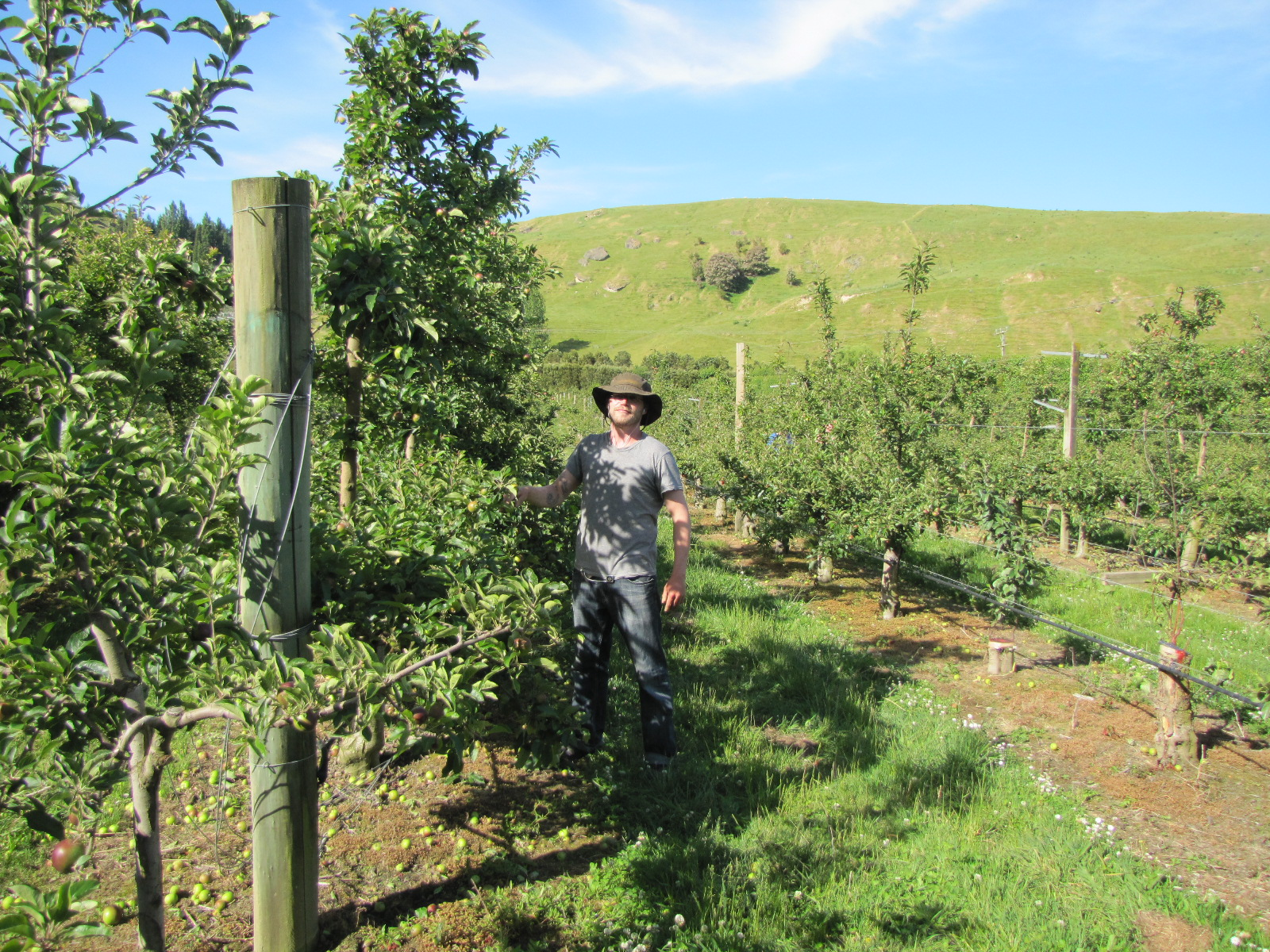 Picture of me standing in an apple orchard in New Zealand. I'm wearing a floppy hat, dirty T-shirt and jeans. In the distance behind the orchard are rolling hills.