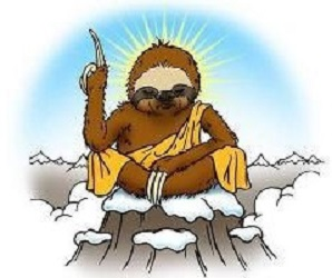 wise-sloth